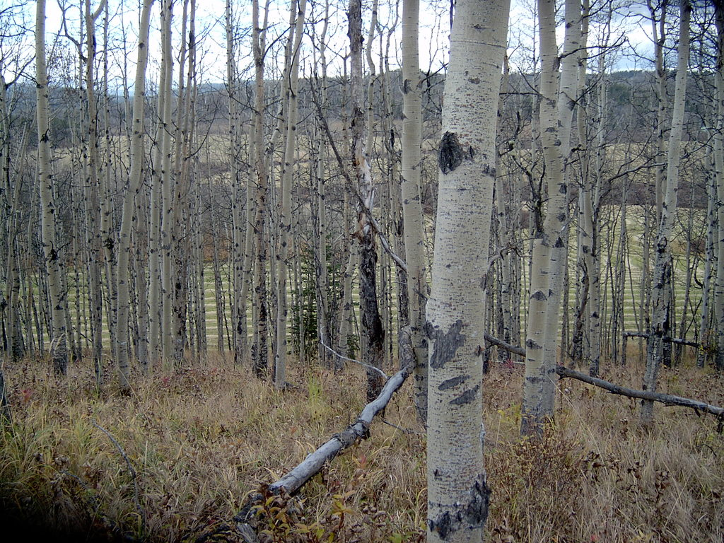 Land / Acreage For Sale in Bragg Creek, AB