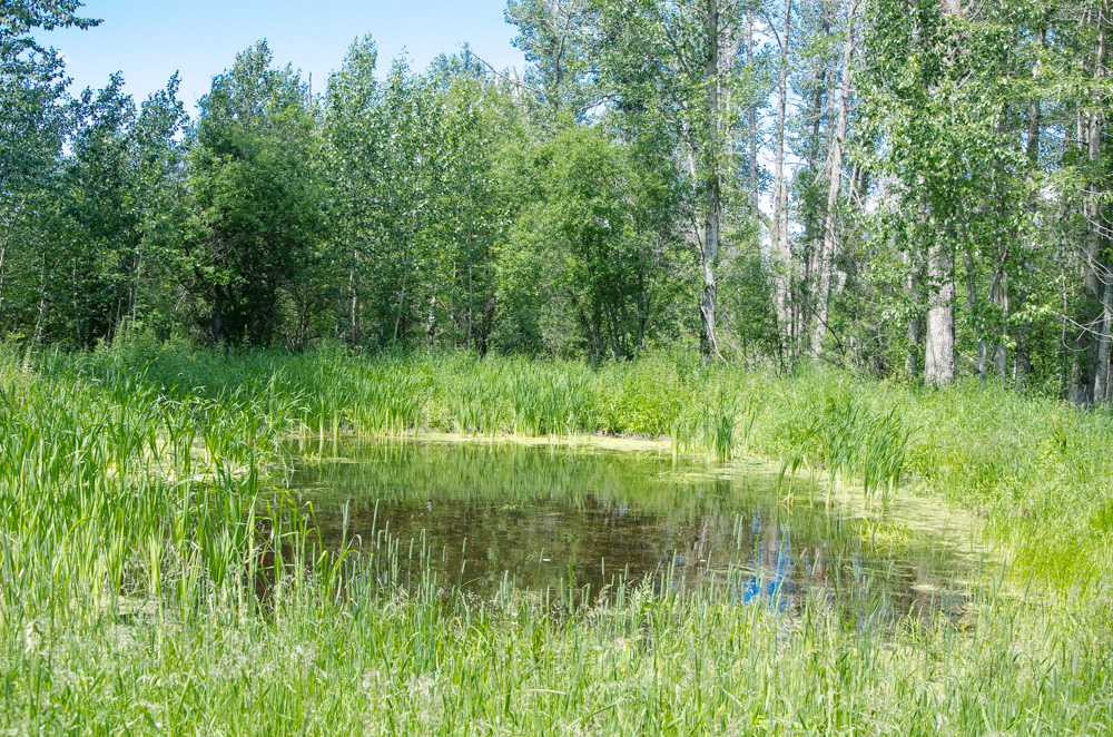 Land / Acreage / Farm For Sale in Lac Ste Anne County, AB
