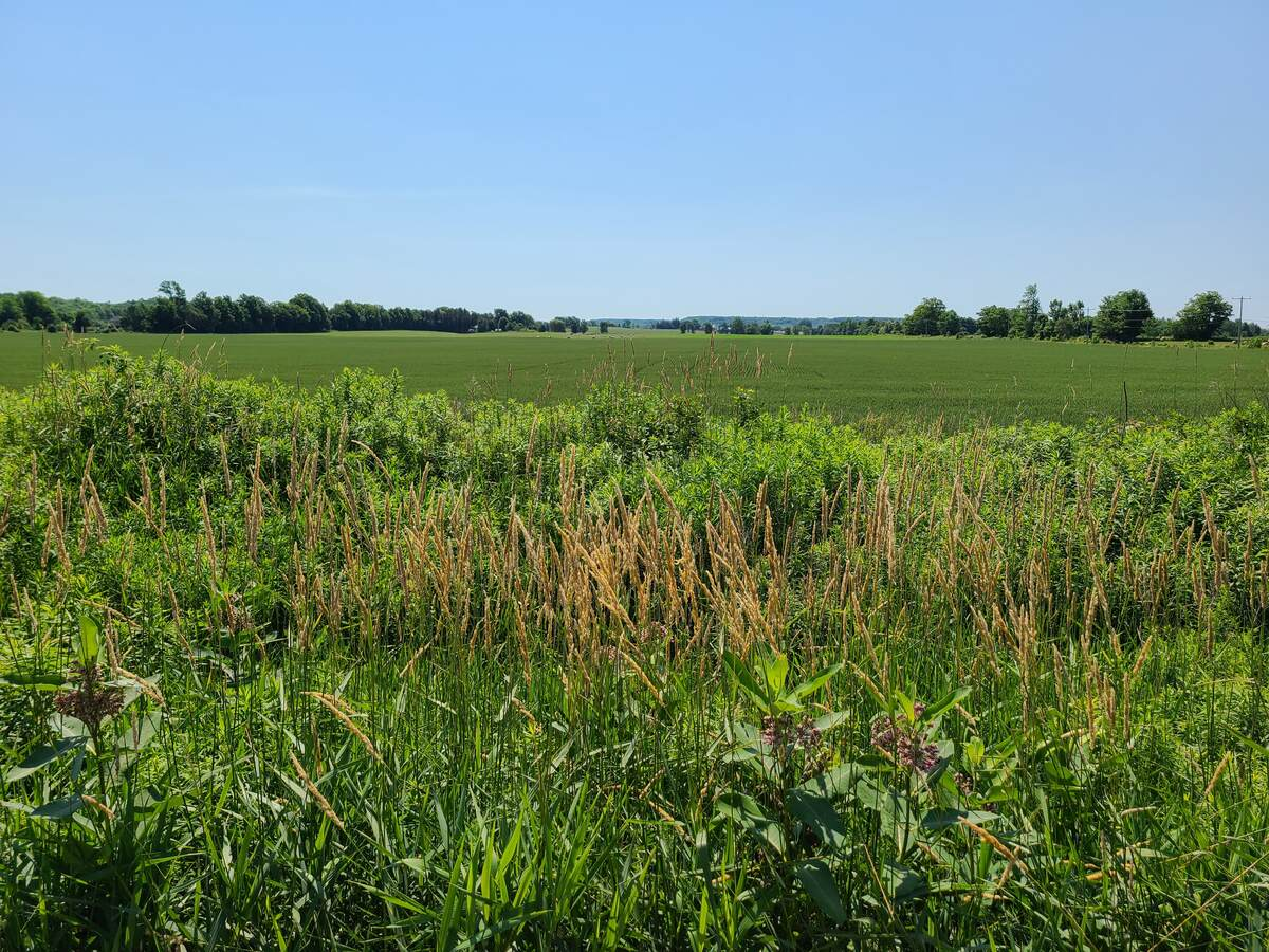 Vacant Land / Acreage For Sale in Balaclava, ON
