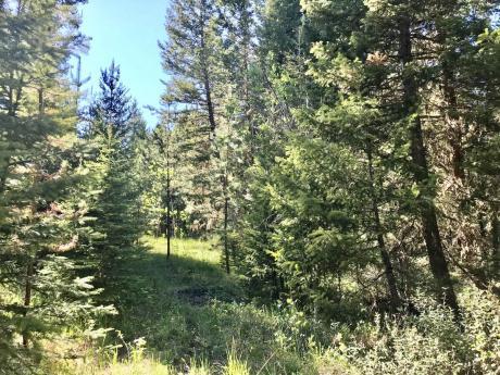 Vacant Land / Acreage / Farm / Recreational Property For Sale in Lac La Hache, BC - 0 bdrm, 0 bath (Lot 5 Park Place)