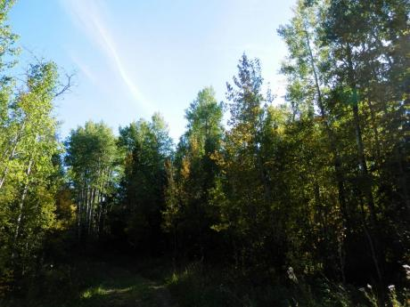 Empty Lot / Building Lot / Land / Recreational Property For Sale in Westerose, AB - 0 bdrm, 0 bath (NW 1/4 Sec 35-45-2-5)